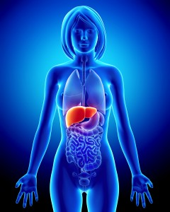 Anatomy of female liver in blue